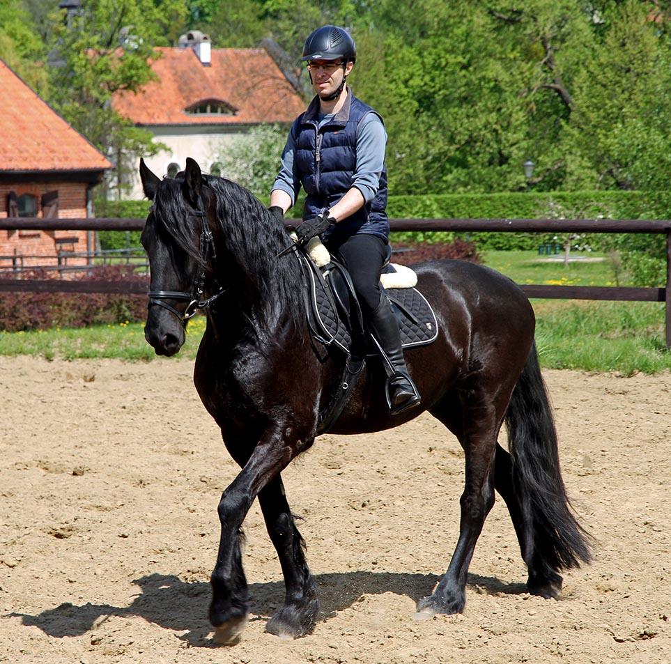 JEŹDZIECTWO - co warto wiedzieć o jeździe konnej - Mangosteen